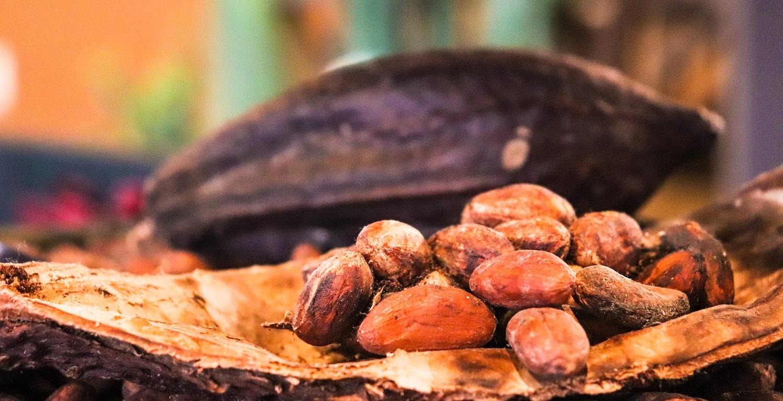 Fèves de cacao, produit base pour les chocolats de la chocolaterie Seydoux à Noiraigue, Val-de-Travers